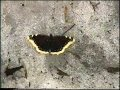 Бабочки на снегу mp3