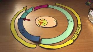 The Cell Cycle (Stop Motion Video Project)