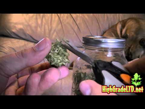 A PLUS TV - How To #2 (Trim Your Medical Marijuana/Cannabis/Bud/Weed)