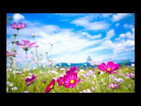 Kayal Song Ye Aala Paakka  Poren video