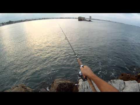 תפיסת פלמודים קטנים בג'יג חוף - רון דדון - פורום הדיג הספורטיבי בישראל Israel Sport Fishing ISF
