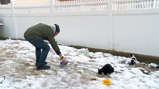 Feral Cats Are Freezing