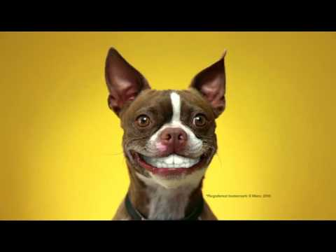 Funny Dog Food Commercial