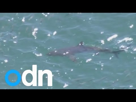 Sharks spotted off coast of Japan