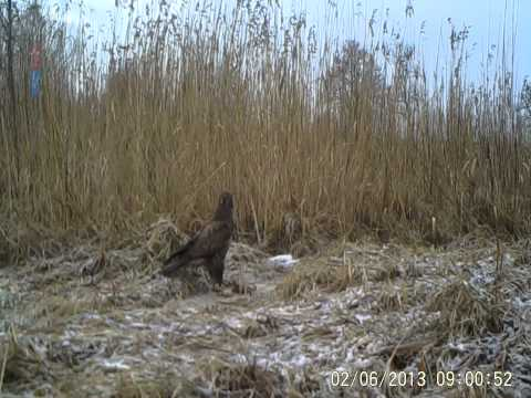 Filmik wykonany za pomocą fotopułapki Ecotone SGN 6210MHD Movie made by digital trail camera Ecotone SGN 6210MHD