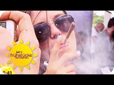 KIFFER-PARADIES: Die Hanfmesse   SAT.1 Frühstücksfernsehen   TV