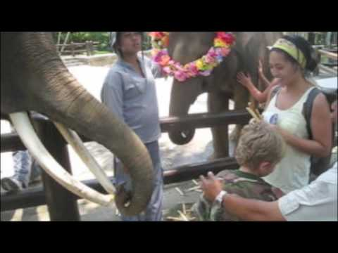 Feeding Sumatran Elephants at Elephant Safari Park
