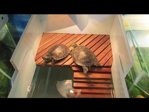 Как можно сделать островок для красноухой черепахи своими руками 567