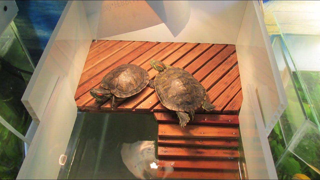 Что нужно для красноухой черепахи, для содержания её дома 858