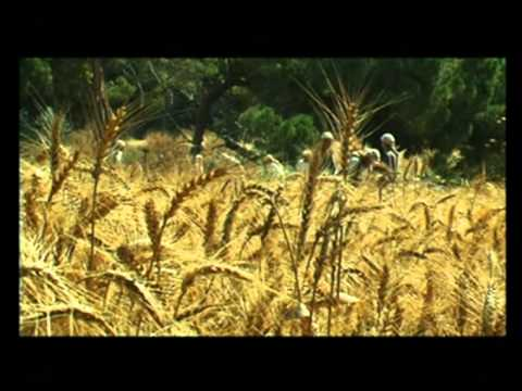 THE WHEAT HARVEST - His winnowing fork is in his han