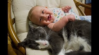Cats Meeting Babies for the First Time Compilation (2015)