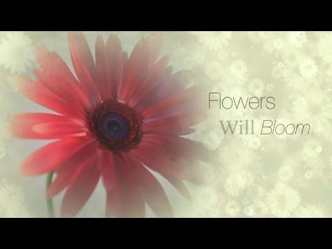 Roberto Menescal  Ft. Various - Flowers Will Bloom video