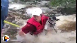 Dog Rescued From Hurricane Harvey   The Dodo