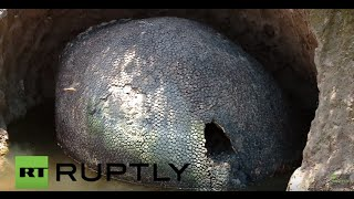 Argentina: Farmer discovers 10,000-year-old glyptodon fossil in Ezeiza