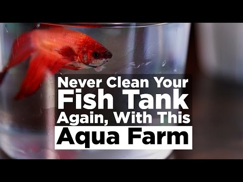 Never Clean Your Fish Tank Again, With This Aqua Farm