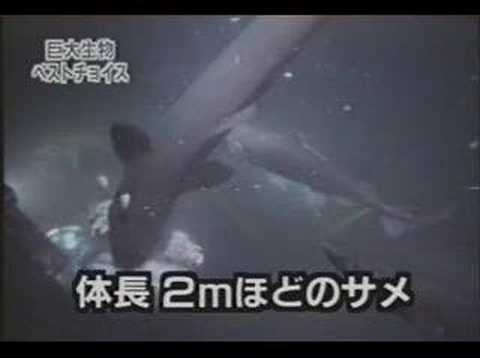 Megalodon Video