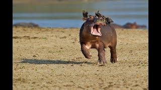 Kiếp sống thú cưng - Những con vật hài hước nhất hành tinh