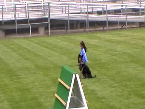 Samantha 2010 WDC Schutzhund-Obedience