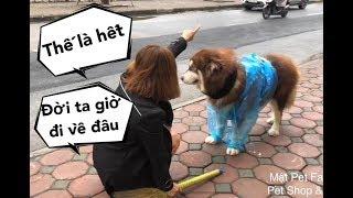 Mật giả chết vì lỡ gây họa,  mặc áo mưa bị đuổi ra đường - Mật Pet Family