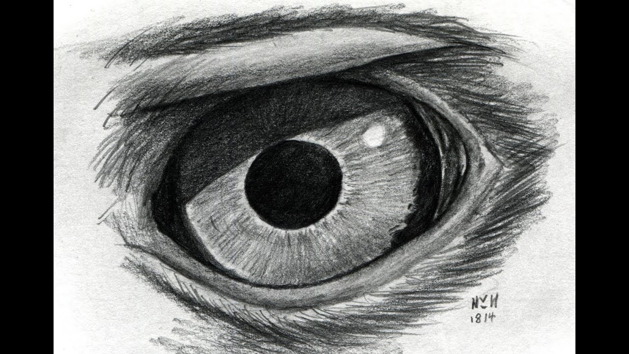 Eagle Eye Pencil Drawing Drawing an Eagle's Eye 2x