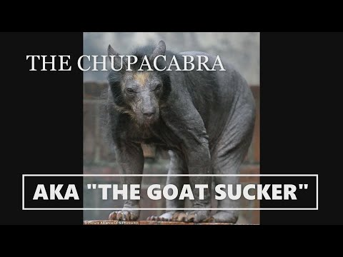 chupacabra footage (goat sucker)