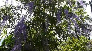 #5906, Arbustos con flores moradas se mueve con el viento [Raw], Plantas y naturaleza