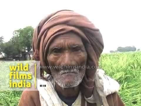 Indian farmer cries as rain has damaged his crops