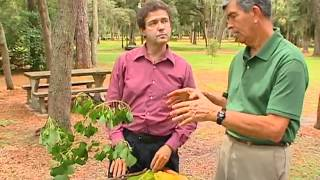 Central Florida Gardening - Poisonous Plants to Touch