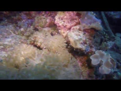Solomon Islands - Diving at Nusa Aghana (Western Province) 2.7K