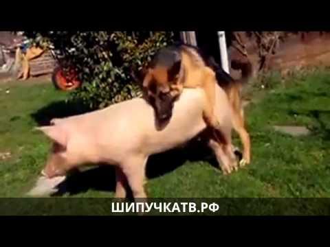 Видео про сексуального пса