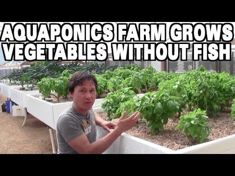 Aquaponics Farm Grows Vegetables without Fish