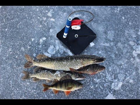 Первый лёд 2017-2018. Рыбалка на жерлицы. Ловля щуки окуня по первому льду.