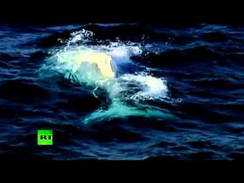 Rare video: Elusive all-white humpback whale caught on camera off Australia