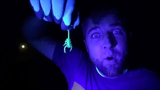 What to do if You Have SCORPIONS In Your House!