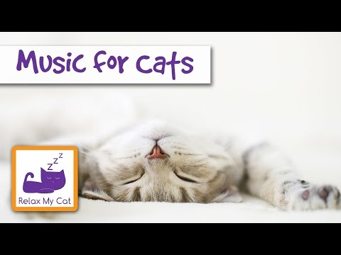 Music for cats relaxing soothing sounds to help with stressed cats IT WORKS