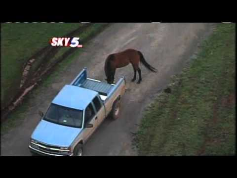 Horse Lands In Swimming Pool After Tornado Ride
