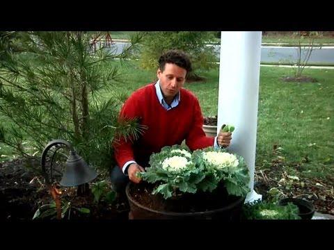 Winter Container Garden Ideas : Fall & Winter Flowers