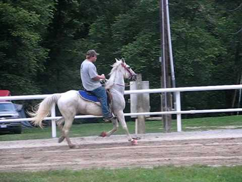 """""""SOLD"""" speed racking mare """"Take a chance on me"""""""