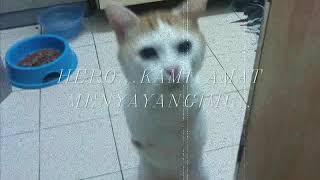 Ketabahan Kucing Hero Dipotong Kaki ( Yet I Do Have A Heart )