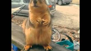 Fat squirrel loves you