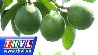 THVL l Khoa học nông nghiệp: Kỹ thuật trồng chanh thương phẩm (13/07/2015)