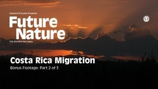 "FUTURE NATURE ""COSTA RICA MIGRATION"" Part 2 of 3"
