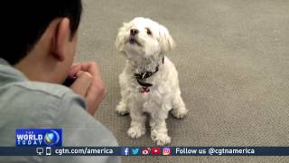 Technology creating more innovative pet care gadgets