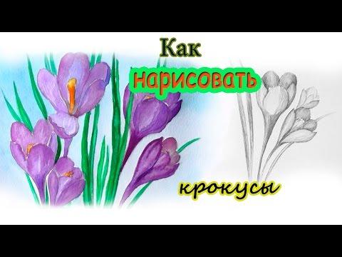 Видео как нарисовать цветок акварелью