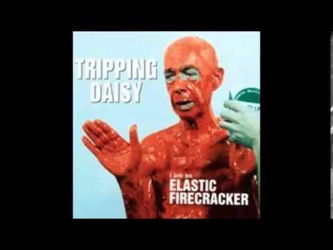 Tripping Daisy - Raindrop