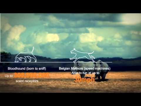 The Rhino Dog Squad - saving Kenya's rhinos