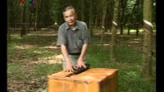 Biệt động Sài Gòn - Gia Định 3