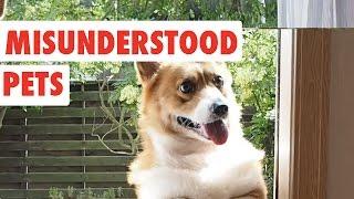 Misunderstood Pets | Funny Pet Video Compilation 2017