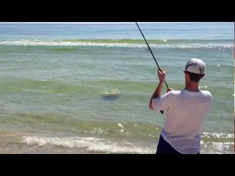 Man Catches 70-lb Stingray, Gulf Shores, AL, Part 1