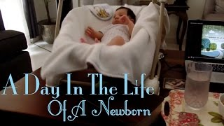 A Day In The Life Of A Newborn Baby